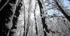 Istranca Ormanları'ndan kartpostallık görüntüler