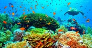 Okyanusların büyüleyici mercanları kayboluyor