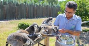 Hayvanlar için serinletici menüler