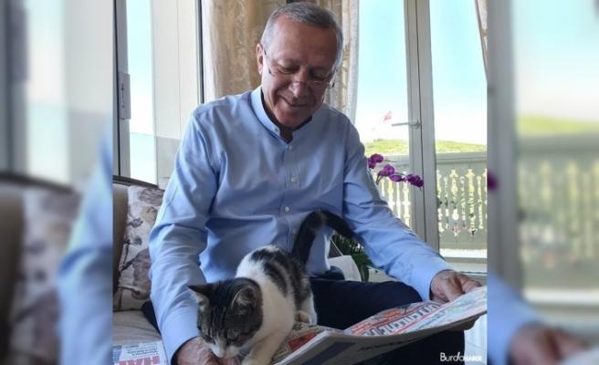 Cumhurbaşkanı Erdoğan torununun kedisiyle olan fotoğrafını paylaştı