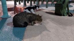 Kediler balıkçıları, balıkçılarda oltayı bekliyor