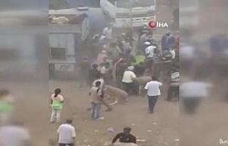 Fas'ta kurban pazarı karıştı, 20 kişi gözaltına...