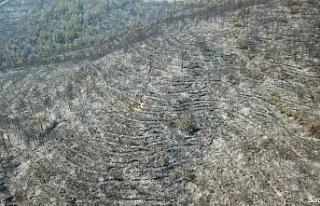 Hatay'daki yangında zarar gören orman alanları...