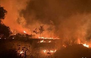 İzmir'de evde çıkan yangın zeytinlik alana sıçradı