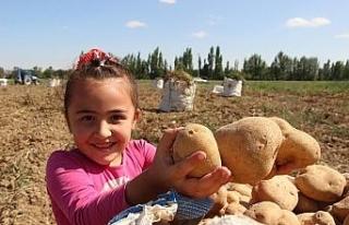 Patates tarlalarında çalışmak için binlerce kilometre...