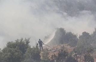 Ürdün'de orman yangını
