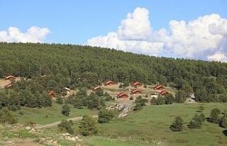 Erzincan'da ormanlık alanlara girişler 15 Eylül'e...