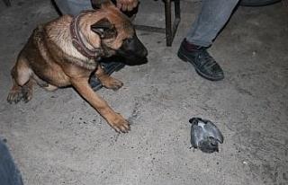 Yavru güvercin ile köpeğin dostluğu yürekleri...