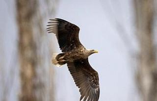 Yıllarını verdi, 280 farklı kuş türünü fotoğraflamayı...