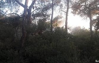 Büyükada'daki orman yangını kontrol altına alındı