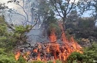 Örtü yangını ormana sıçradı