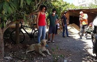 Sokak köpeğine uygunsuz hareketlerde bulunan yaşlı adam gözaltına alındı