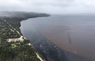 Avustralya, kıyıya vuran balina cesetlerini imha etmeyi planlıyor