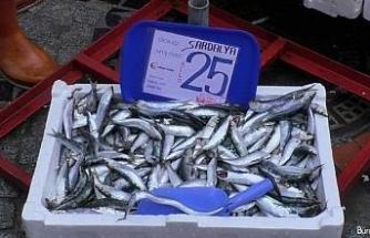 Küçük balıkların fiyatı yarı yarıya düştü