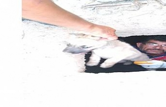 Iğdır'da foseptik çukuruna düşen yavru köpek kurtarıldı