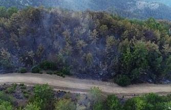 Kozan'daki yangın kontrol altına alındı