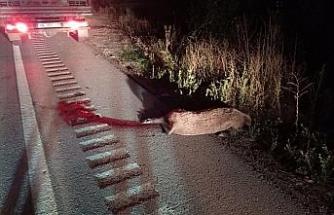 Yola çıkan domuz sürüsü kazaya neden oldu: 6 yaralı