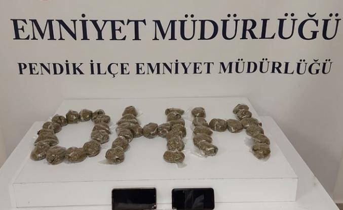 Pendik'te polis çam ağaçlarının altına gizlenmiş bonzai ele geçirdi