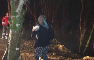 Beykoz'da mandırada yangın çıktı, hayvanlar telef oldu