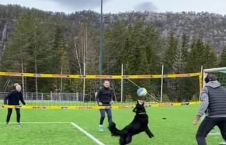 Norveçli voleybolcunun köpeğiyle antrenmanı hayran bıraktı
