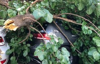 Şişli'de çürüyen ağaç böyle devrildi