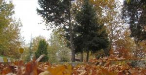 Sonbaharın tadı için yaprakları temizlemeyen Belediye