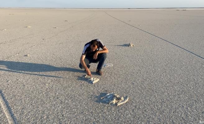 Flamingo cenneti Tuz Gölü'nde flamingo ölümleri