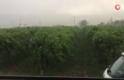 Fırtına bağları yan yatırdı, ağaçları devirdi