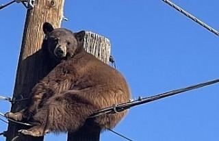 ABD'de elektrik direğinin tepesinde mahsur kalan...
