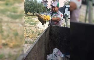 Çöpe atılan kaplumbağayı temizlik görevlileri...