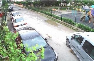Yolda oynayan yavru köpeği ezip yoluna devam etti