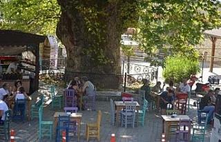 Bayır Mahallesi'nin simgesi çınar ağacı asırlara...