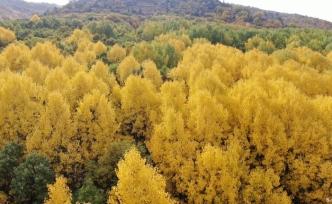 Tunceli sonbaharda görsel şölen sunuyor