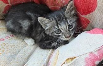 Balıkesir'de arabanın motoruna giren kedi yavrusunu itfaiye kurtardı