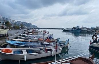 Balıkçıların hamsi sevinci