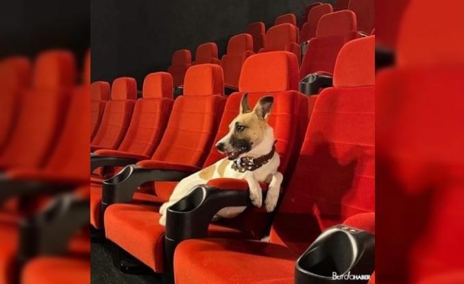 Çekya'da sokak köpeklerinin hayatını anlatan film vizyonda