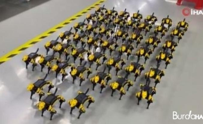 Çin'de geliştirilen evcil robot hayvanlara ilgi artıyor