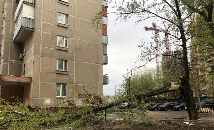 Moskova'da şiddetli rüzgar 56 ağacı devirdi: 2 yaralı
