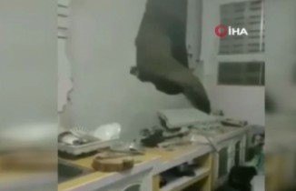 Tayland'da karnı acıkan fil, 1 ay sonra ikinci kez aynı evin mutfak duvarını kırdı